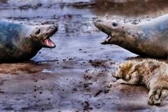 3rd Grey Seals