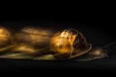 Faster than a speeding snail