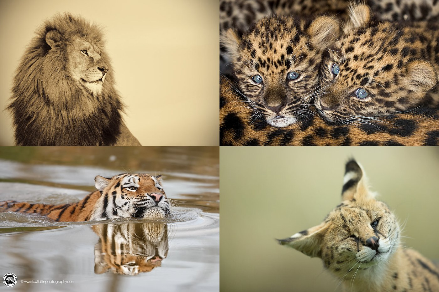 The Art of Zoo Photography