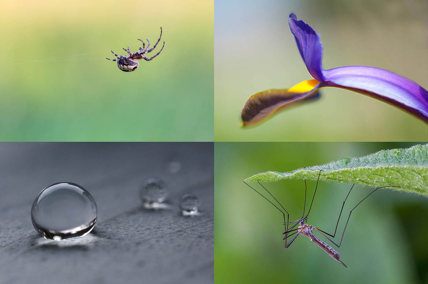 The Small World of Macro Photography